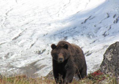 Kamtschatka: die fantastische Natur Erlebnis Reise zu den Bären und auf die Vulkane